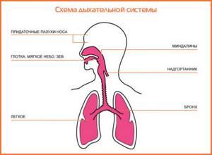 Катар верхних дыхательных путей симптомы и лечение, что это такое