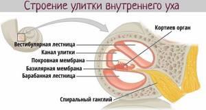 Строение и функции наружного уха: возможные заболевания органа