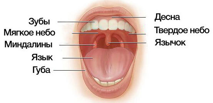 Язычок в горле - как называется и для чего он нужен, увулит симптомы и лечение