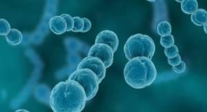 Стрептококковая ангина у ребенка: симптомы и лечение