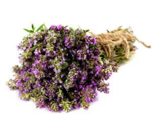 Отхаркивающие травы: виды, лечение, польза фитотерапии