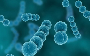 Гемолитический стрептококк - схема лечения заболевания, причины