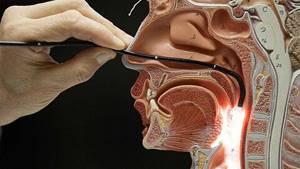 Показания к эндоскопии носа и носоглотки у ребенка, зачем ее делают