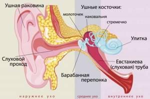 Симптомы отита у грудничка признаки у грудного ребенка - как распознать и определить отит у новорожденного и ребенка до года